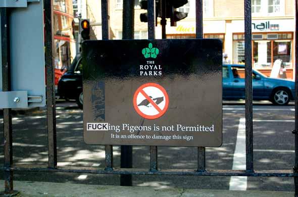 fucking-pigeons
